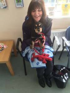 Pippa at the Vets