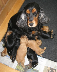 Rosa and Pups 200814 1