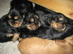 Rosas Pups 030914