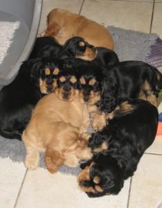 Rosas Pups 260914