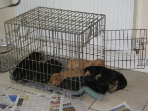 Rosas Pups Cage