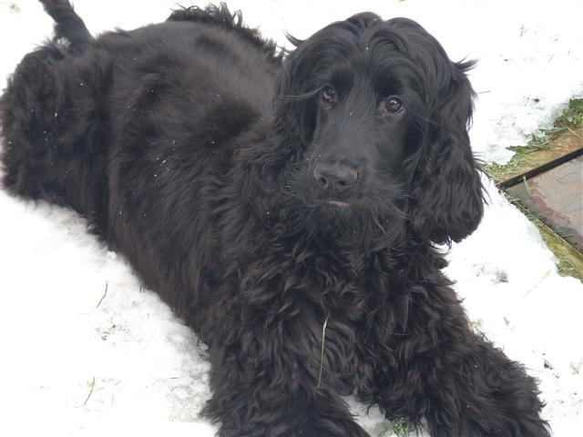 alfie in the snow