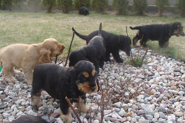 anita's pups april 2012