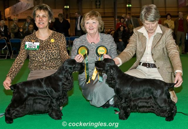 crufts 2011 bitch cc jll