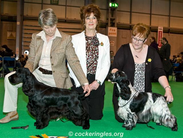 crufts 2011 dog cc jll