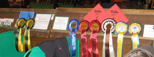 crufts rosettes 2011
