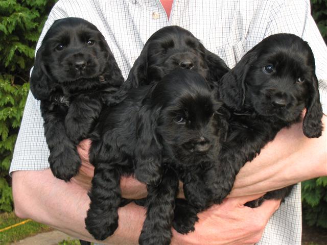 dog pups 130809