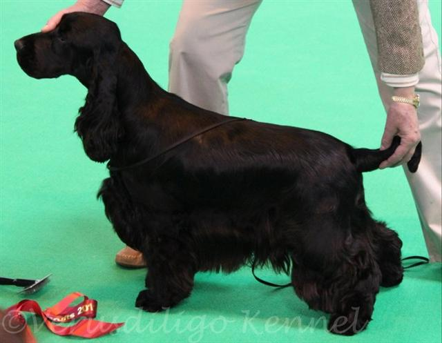 happy crufts 2011