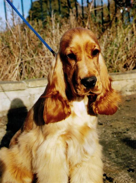 scarlet pup